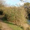 River Avon aqueduct, Grand Union Canal (7)