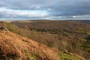 Woodland below Gardom's Edge (2)