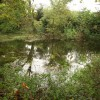 Pond near Clavelshay