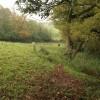 Field at Burlinch
