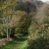 Path into Hollicombe