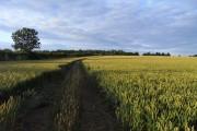 Farmland, Stanton St John