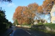 Autumn colour in Standlake