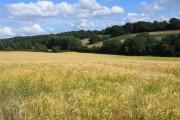 Barley, Froxfield