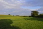 Pasture, Chilton