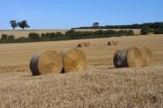 Farmland, Lasham