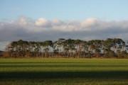 Farmland near Barnham