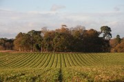 Farmland near Euston
