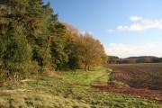 Triangle Wood, near Barnham