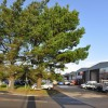 Pines and commercial units - Saltash