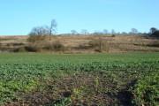 Farmland, North Cliffe