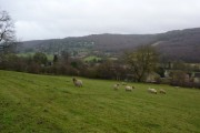 Sheep grazing in Grindleford