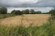 A small riverside field