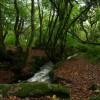 Bosahan Woods