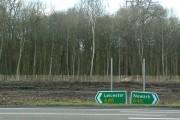 Receding tree line, Coney Grey Wood