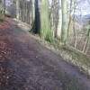 Footpath in Yeld Wood