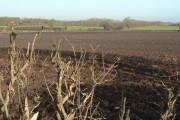 Fields near Tollerton