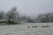 Near Linsidemore