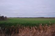 Farmland, Minster Marshes