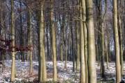 Panelridge Woods