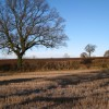 Scattered oaks west of Radford Semele