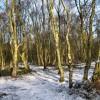 Winter sun through the wood