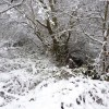 Stream and footpath in the snow