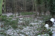 Lingering snow in Chantry Wood