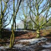 Winter woodland on Colton Hills, Wolverhampton