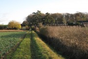Footpath approaching Weston Colville