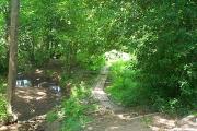 High Park Wood, Moorgreen