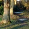 Woodland Footpath, Bisley Common