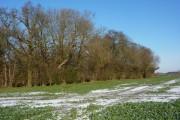 Small wood at Ash Grove