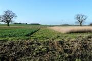 Farmland off Great Common Road