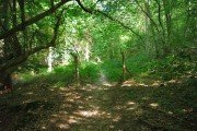 Private to public woodland