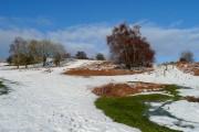 Spring in winter on Garway Hill