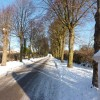 Pollarded avenue of  trees, snow and long shadows