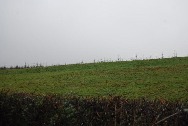 Hillside by a lane near crowcombe