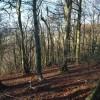 Westridge Wood