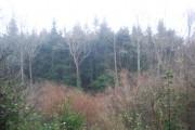 Woodland off Aller Lane