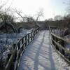 Marshland boardwalk
