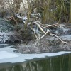 Riverbank and fallen tree