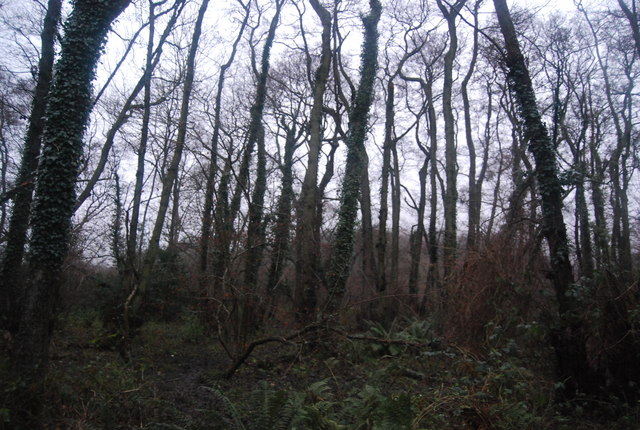 Woodland near the junction Of Chilcombe Lane & Thorncombe Lane