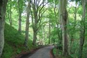 Auchendinny Wood