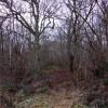 Footpath through the woods at Sandford Brake