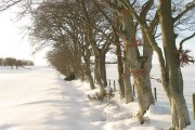Beeches, Woodheads Hill