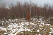 Woodland, West Mains