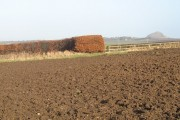 Beech hedge and ploughed field