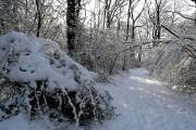 In Morgaston Wood