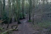 One of the many footpaths through Telegraph Woods